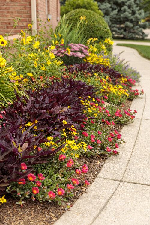 10 Garden Filler Plants Proven Winners, Chartreuse Bedding Plants