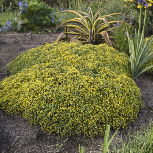 20 Durable Plants For Hot Weather Proven Winners