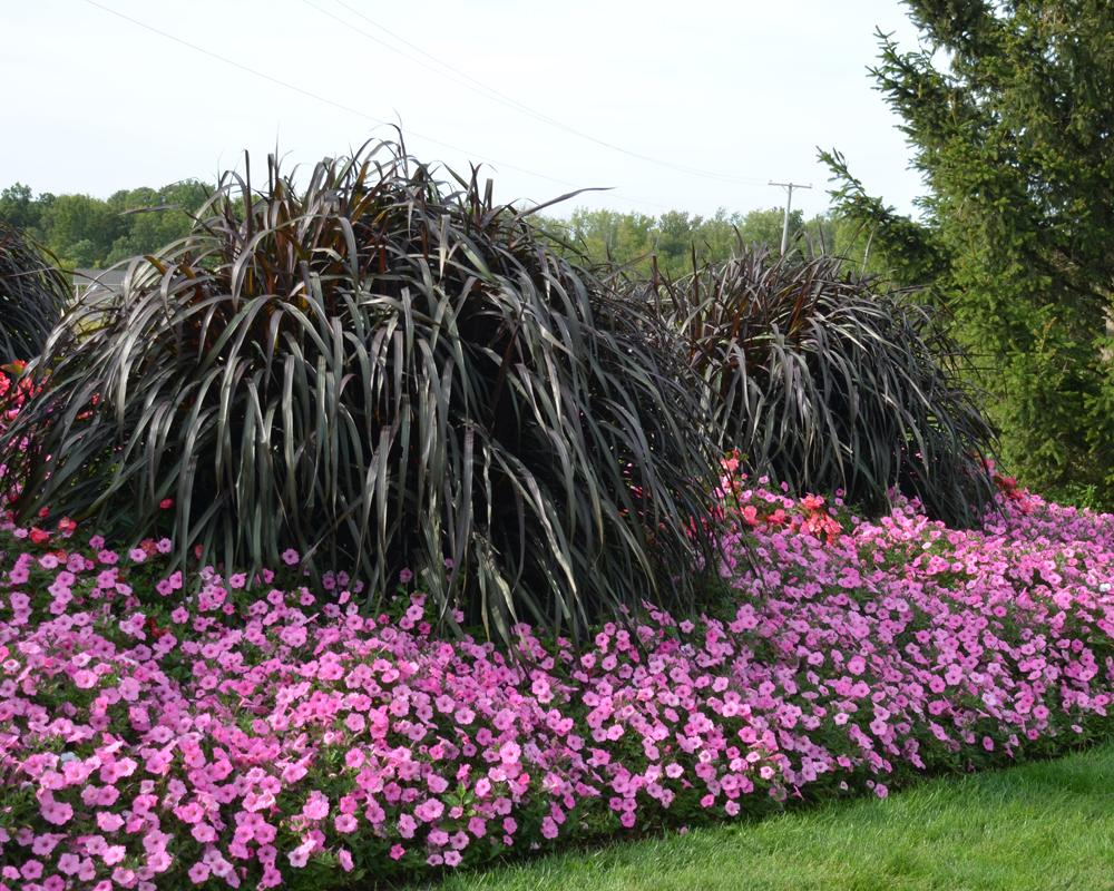 10 Companions For Ornamental Grasses In The Landscape Proven Winners