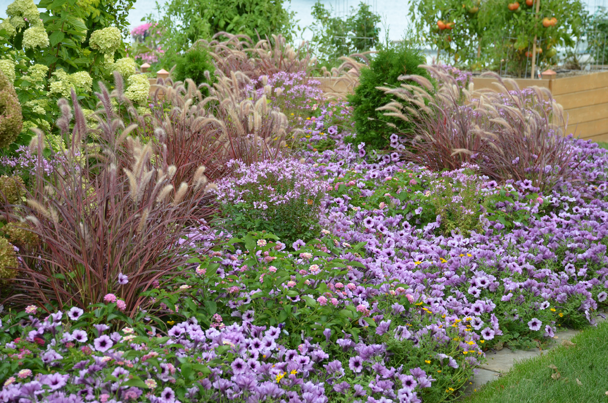 10 Companions For Ornamental Grasses In The Landscape Proven Winners
