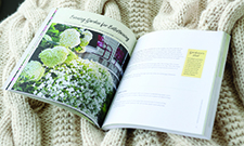 Gardening Ideas   Proven Winners