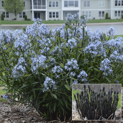 An In Depth Look At Proven Winners Native Perennials Proven Winners