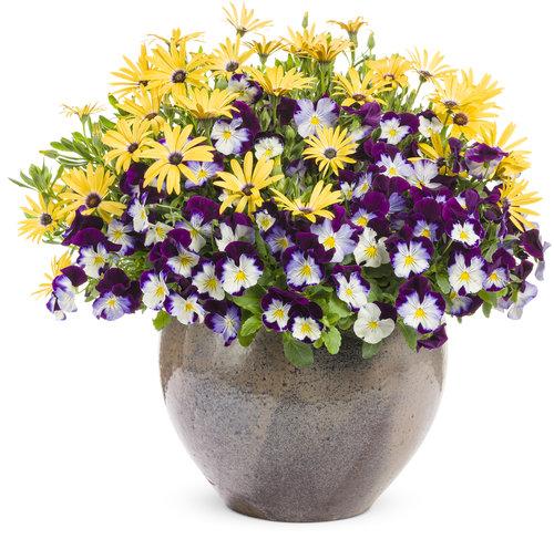 , 10 Essential Spring Gardening Tasks, Redwood Nursery & Garden Center
