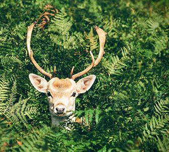 12 Hardy Deer Resistant Proven Winners