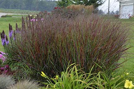 Ornamental Grasses For Inspired Designs Proven Winners