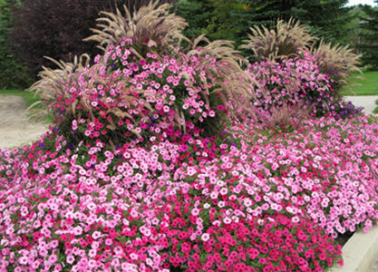 Ten Top Rated Annual Flowers For Easy Maintenance