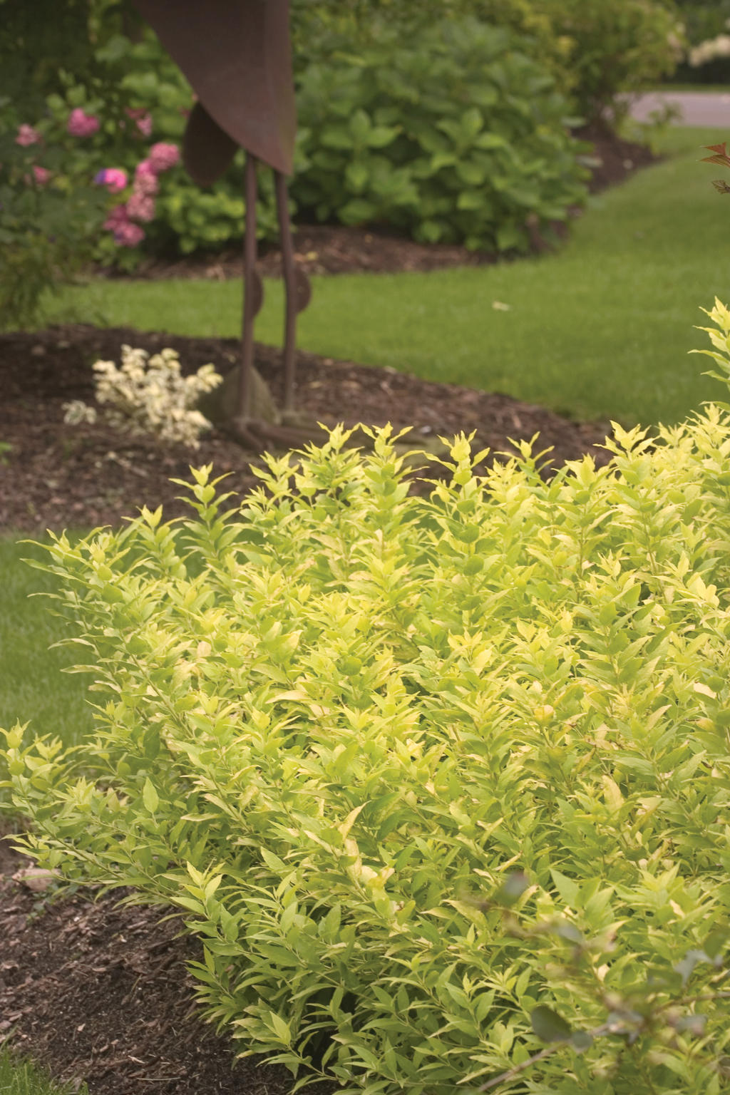 Pruning Shrubs Part 4 A Plant By Plant Guide Proven