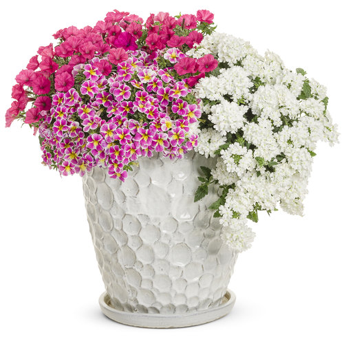 botanical_bouquet.jpg