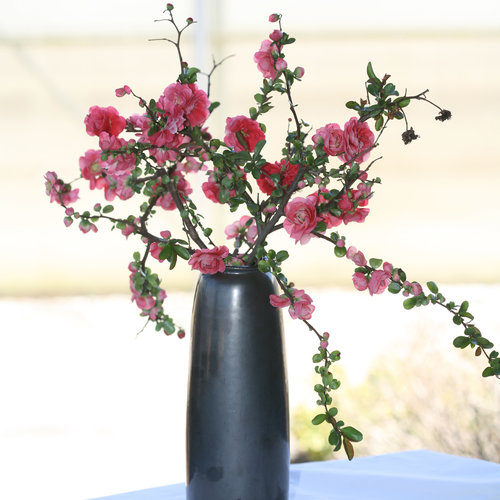 chaenomeles_double_take_pink_vase.jpg