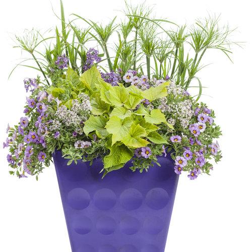 combo_purple_01.jpg