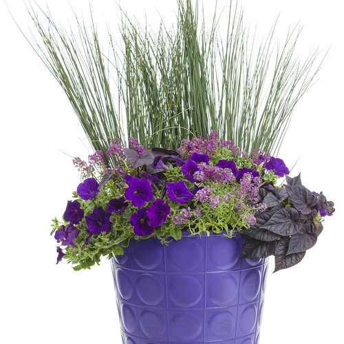 combo_purple_02.jpg
