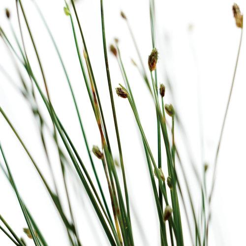 fiberopticgrass01.jpg