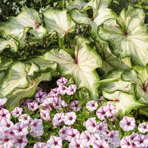 front_porch_garden_150.jpg