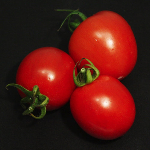 Tempting Tomatoes™ 'Garden Gem' - Lycopersicon esculentum