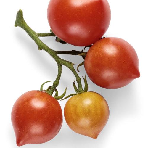 goodhearted_tomato_macro_01.jpg