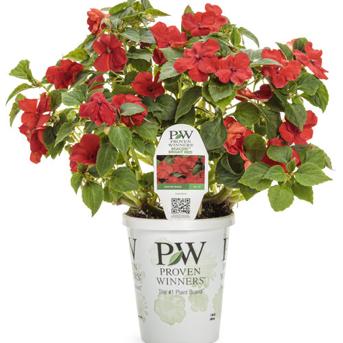 impatiens_sopranor_bright_red_grande.jpg