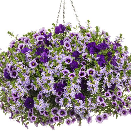 lavender_lipstick.jpg