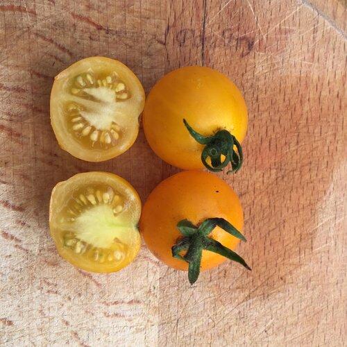 lycopersicon-determinate_yellow_cherry.jpg