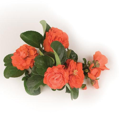 orangestormbranch_7588.jpg