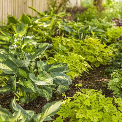 perennials_garden_37.jpg
