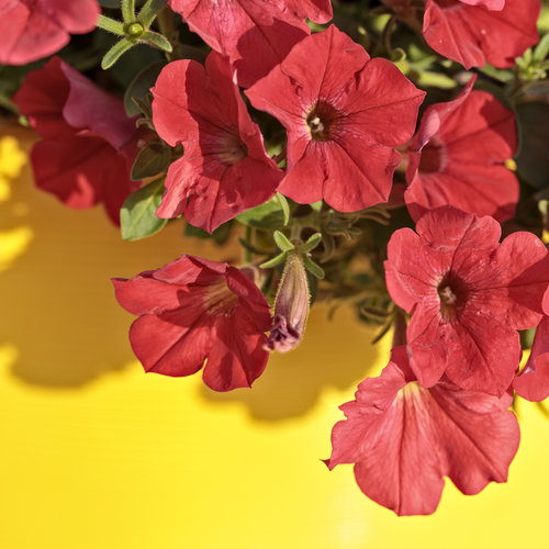 pollinator_patio_253.jpg