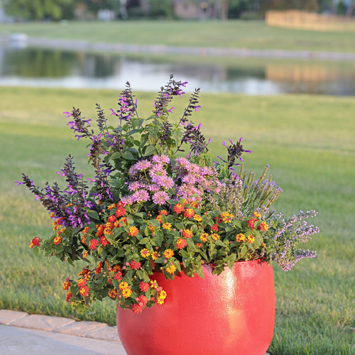pollinator_patio_374.jpg
