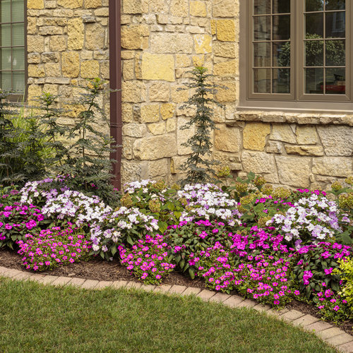 portulaca_and_pentas_bed_08_1.jpg