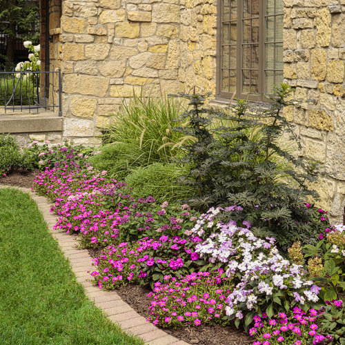 portulaca_and_pentas_bed_10_1.jpg