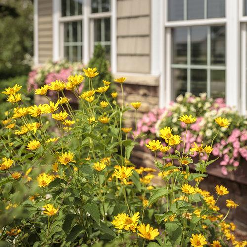 residential_gardens_144.jpg