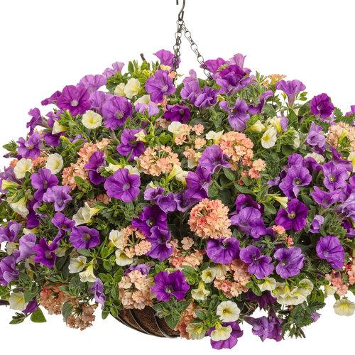 sangria_bouquet.jpg