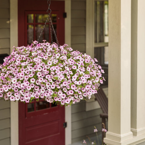 scene_hanging_baskets_at_front_facade_38.jpg