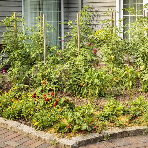 scene_proven_harvest_pollinator_garden_48.jpg