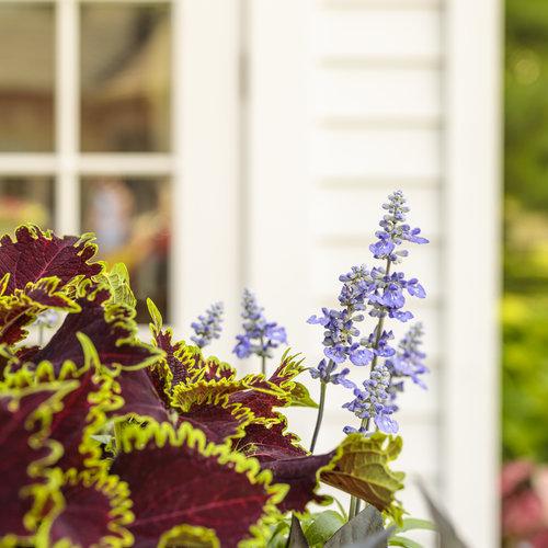 she_shed_garden_62.jpg