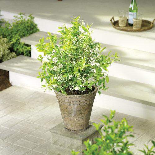 shrubsver2.jpg