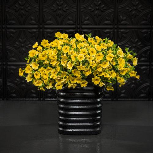 superbells_yellow_mono_black.jpg