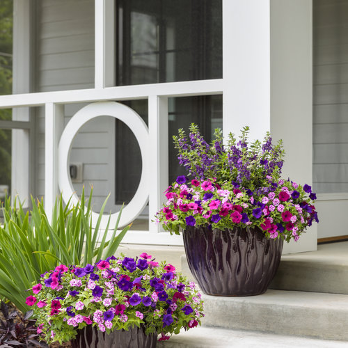supertunia_combos_at_entrance_62.jpg
