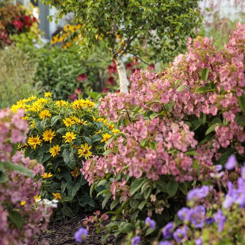 tracys_garden_122.jpg