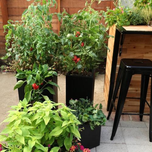 veggie_planters_1.jpg
