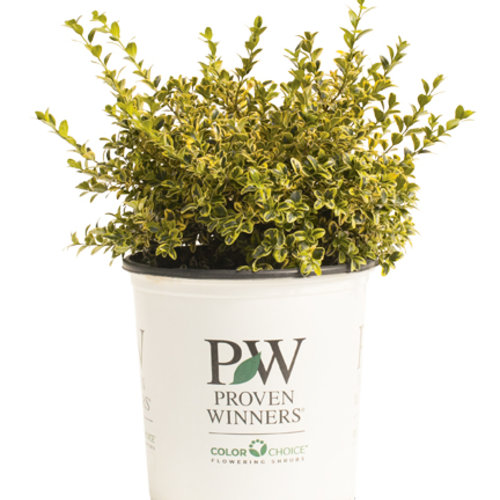 weddingring_buxus_container.jpg