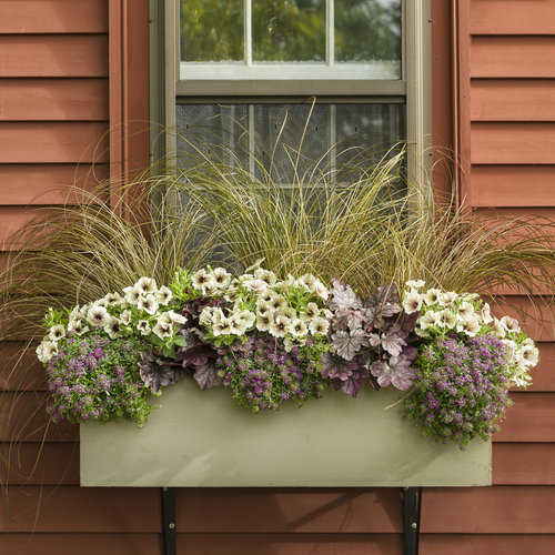 window_box_a_06.jpg