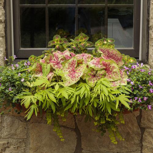 window_box_on_limestone_home_25.jpg