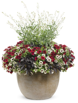 Enchanted Garden with thriller (Stratosphere™ White)