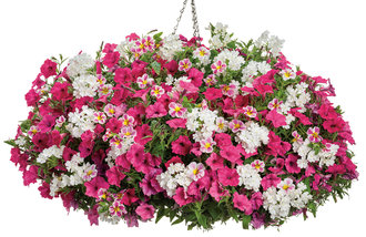 Botanical Bouquet - hanging basket