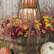 autumn_scene_034.jpg