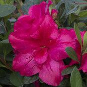 bloom-a-thon_red_7.jpg