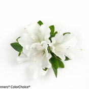 bloom-a-thon_white_rhododendron-2.jpg