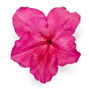 bloom-a-thonred01.jpg