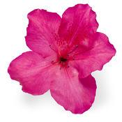 bloom-a-thonred02.jpg