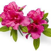 bloom-a-thonred03.jpg