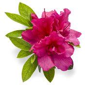 bloom-a-thonred04.jpg